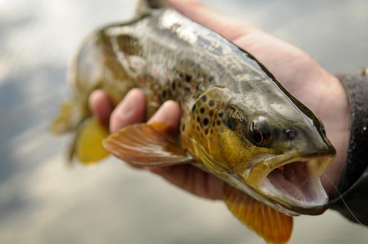 usfish19