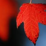Fall Colors around Fairfield California