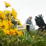 Return to the Wild: Nursing an Injured Golden Eagle Back to Health