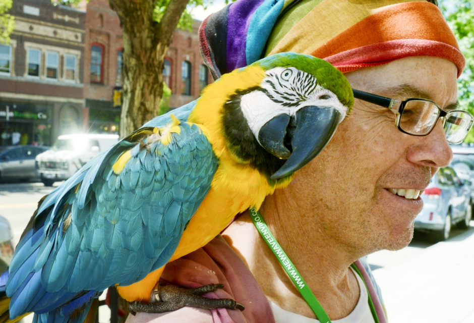 "Mike Greener/Chronicle  Dave Norwoods, of Hollywood, Calif., takes his 29-year-old pet macaw parrot ""Sarge"" our for a walk in downtown Bozeman Thursday morning. Temperatures throughout the Gallatin Valley stayed in the low 70s throughout the day."