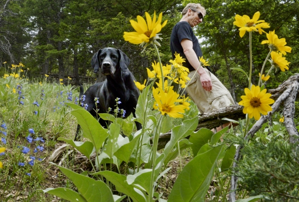 """Wildflowers Along the """"M"""" Trail Viewfinder in Bozeman, Montana for Bozeman Daily Chronicle"""