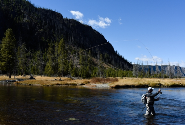 Fall Fly Fishing in Yellowstone National Park