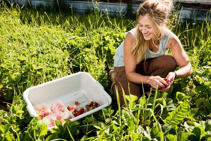 Bozeman Portrait Photography Gallatin Valley Botanical Farm Strawberries